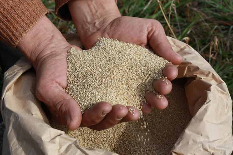 Bolivia Will Export Quinoa to China